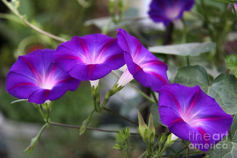 Flowers Photograph - 4 Purples by Yumi Johnson