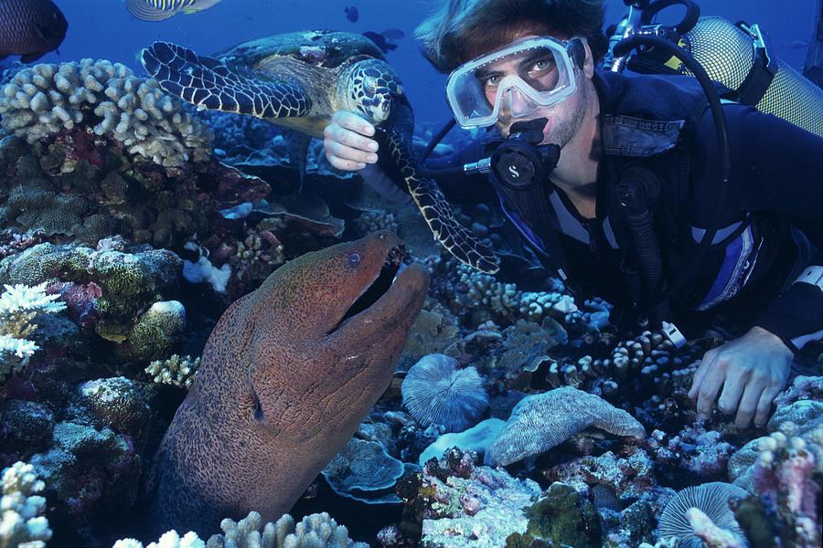 Scuba Diver Photograph - Scuba Diver by Alexis Rosenfeld