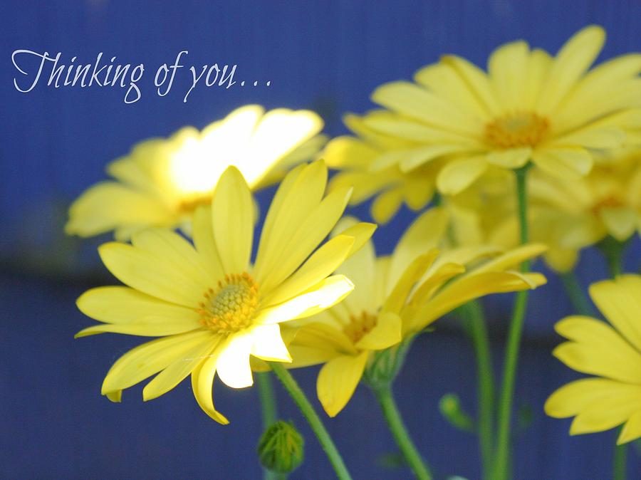 Greeting Cards Photograph - Thinking Of You... by Cathie Tyler