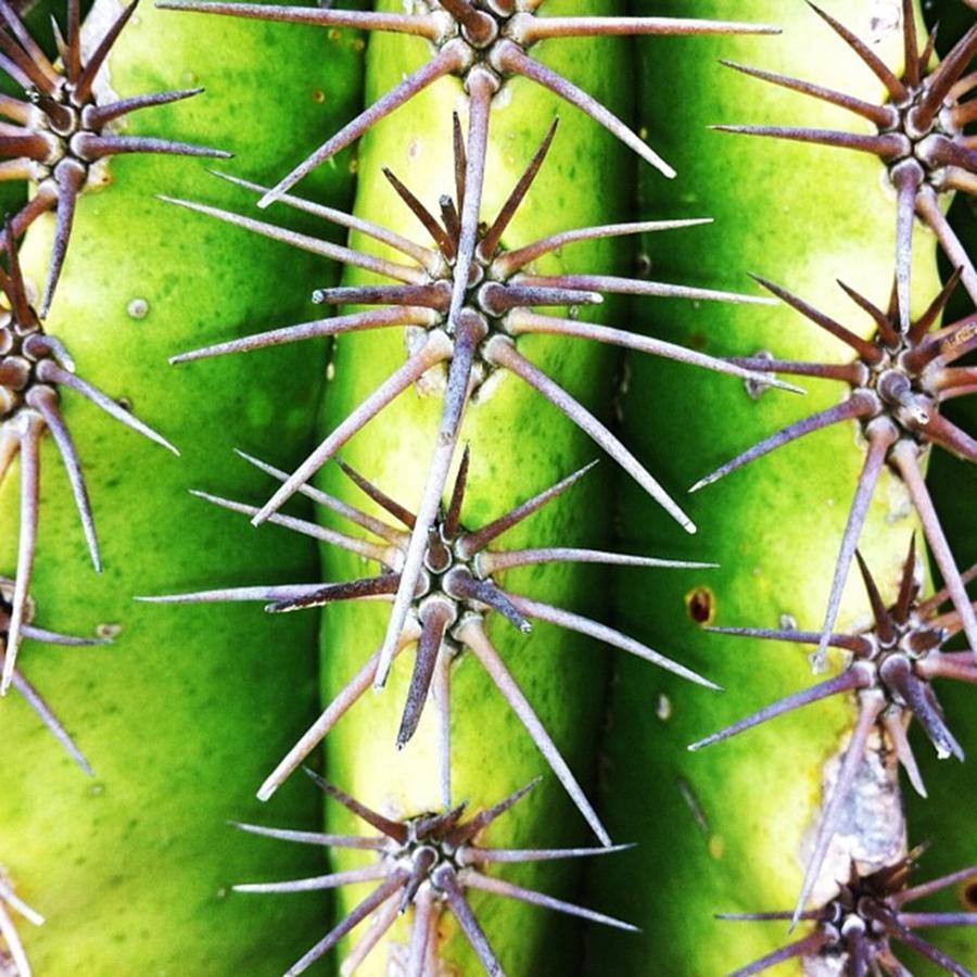 Plants Photograph - Instagram Photo 401340114031 by Ritchie Garrod