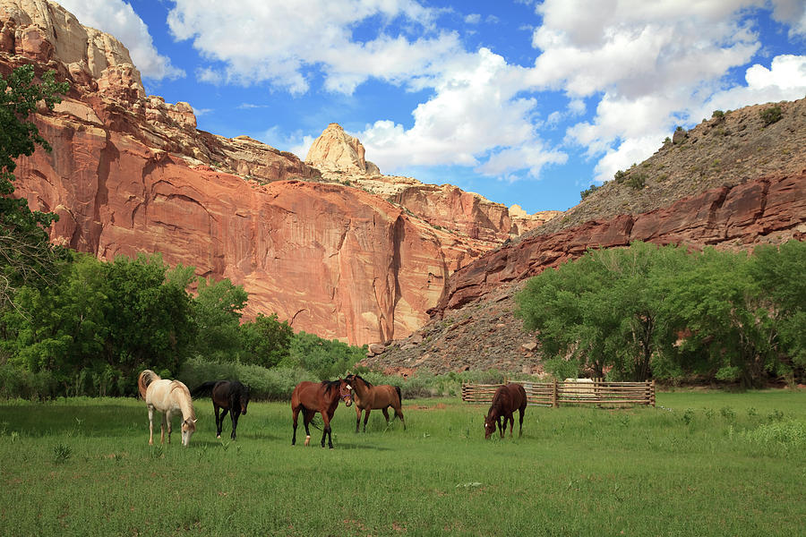 Capitol Reef National Park Photograph by Southern Utah  Photography
