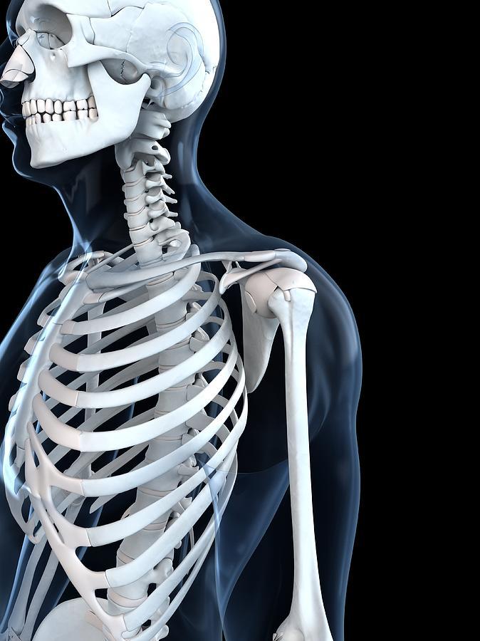 Vertical Digital Art - Upper Body Bones, Artwork by Sciepro