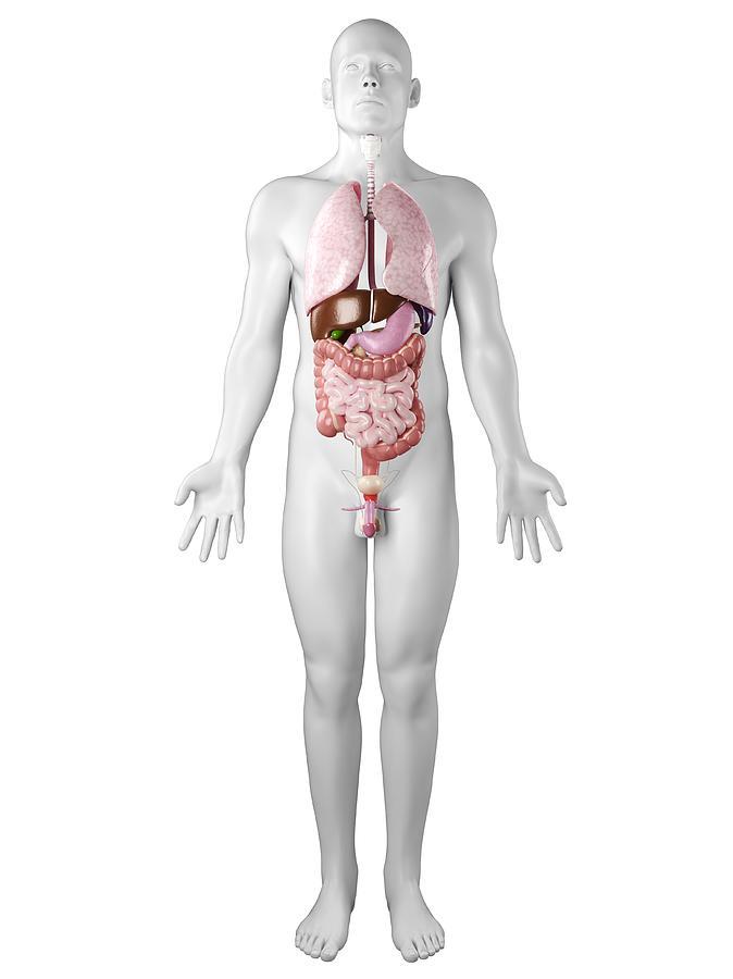 Vertical Digital Art - Male Anatomy, Artwork by Sciepro