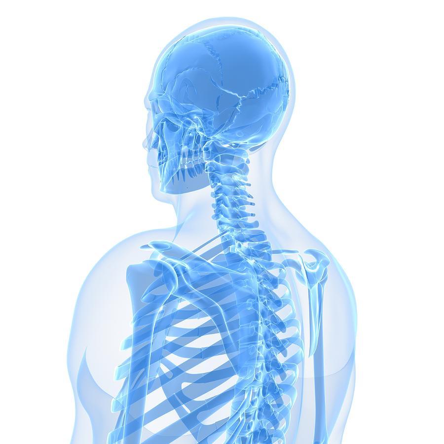 Upper Body Bones, Artwork Digital Art by Sciepro
