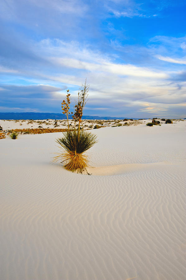 Landscape Photograph - White Sands by Larry Gohl