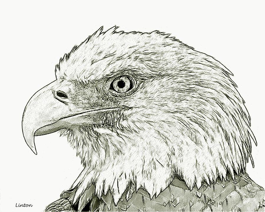 American Bald Eagle Digital Art by Larry Linton