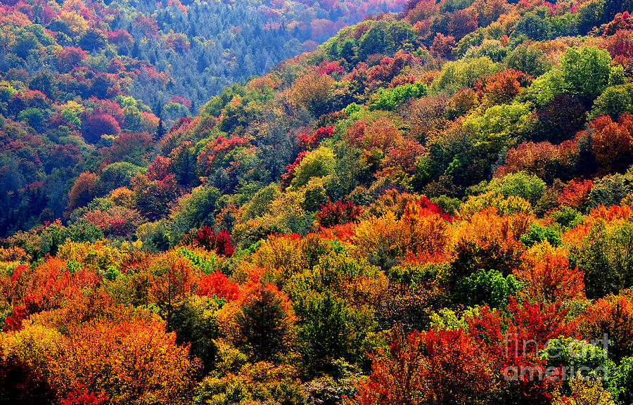 Fall Color Along The Highland Scenic Highway Photograph By