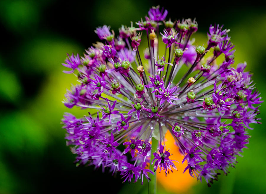 Flowers Photograph - Flowers by Mike Rivera