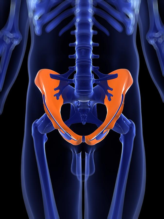 Vertical Digital Art - Hip Bones, Artwork by Sciepro