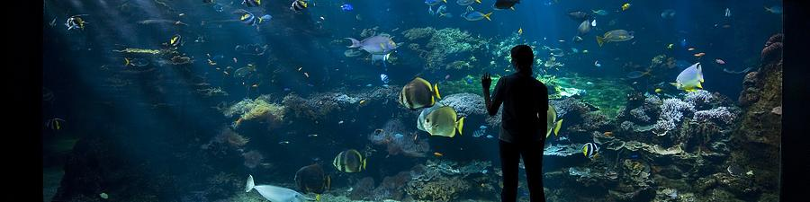 People Photograph - Sea-life Centre, France by Alexis Rosenfeld