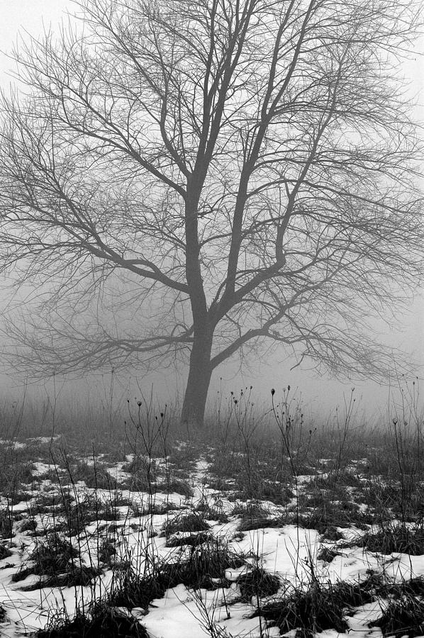 Tippecanoe County Indiana Photograph - Tippecanoe County Indiana by Marsha Williamson Mohr