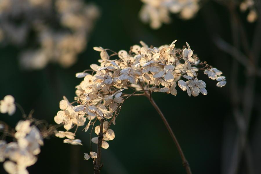 Winter Photograph - Winter Beauty by Valia Bradshaw