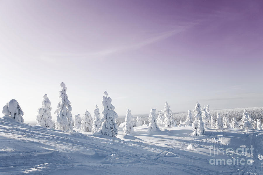 Arctic Photograph - Winter by Kati Molin