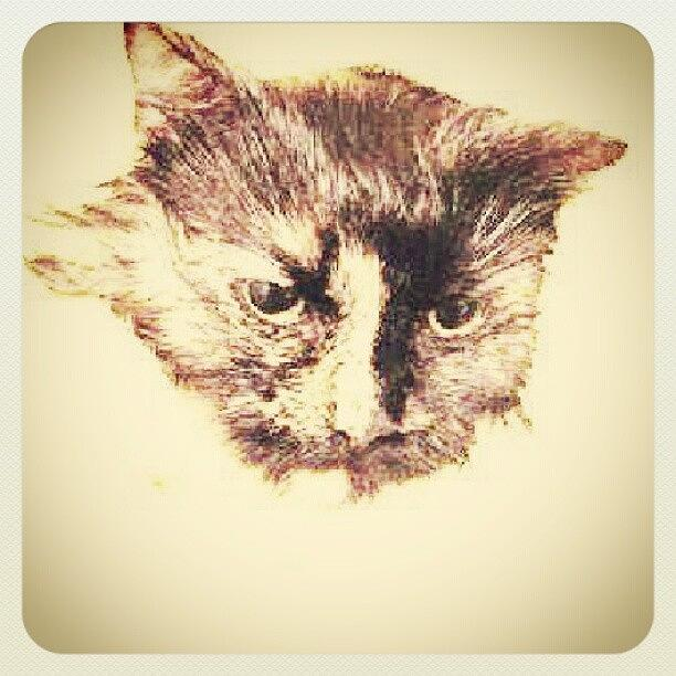 Instagram Photo Photograph by Jinxi The House Cat