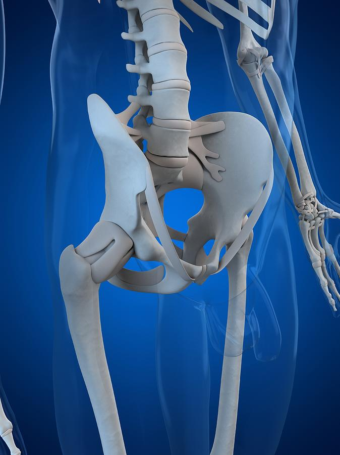 Pelvis Bones, Artwork Digital Art by Sciepro