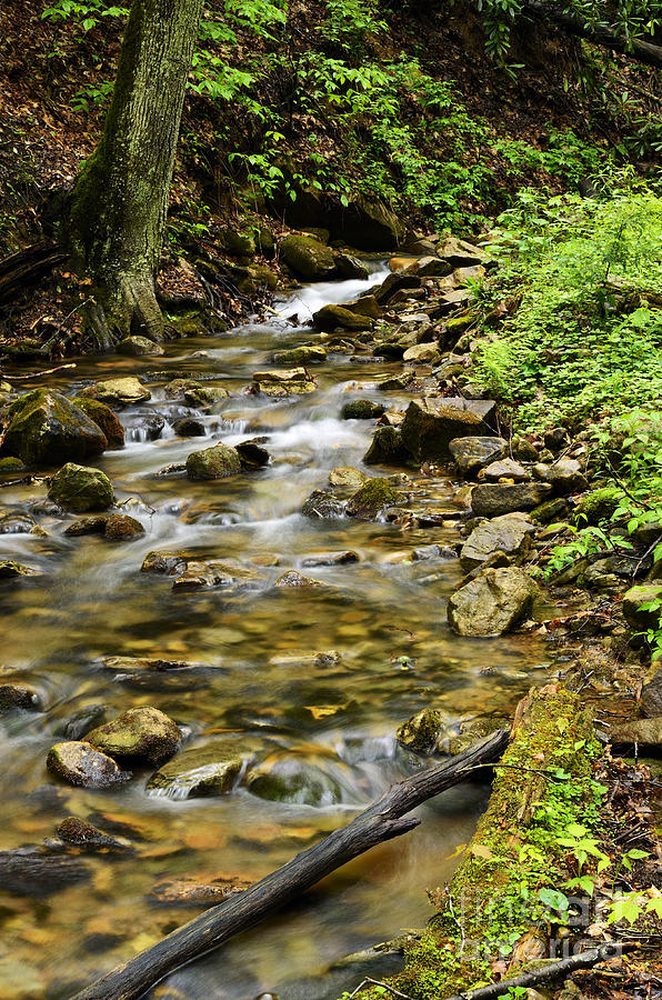 Monongahela National Forest Photograph - Rushing Mountain Stream by Thomas R Fletcher