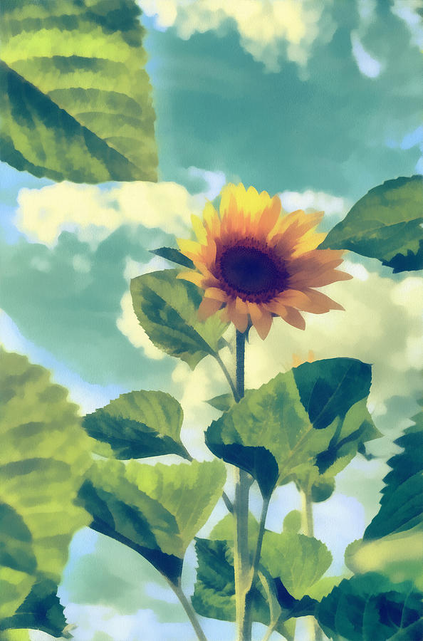 Background Photograph - Sunflower by Michael Goyberg