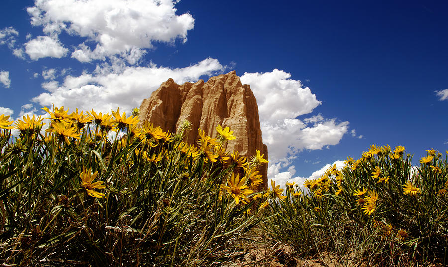 Capitol Reef National Photograph - Capitol Reef National  Park Cathedral Valley by Mark Smith
