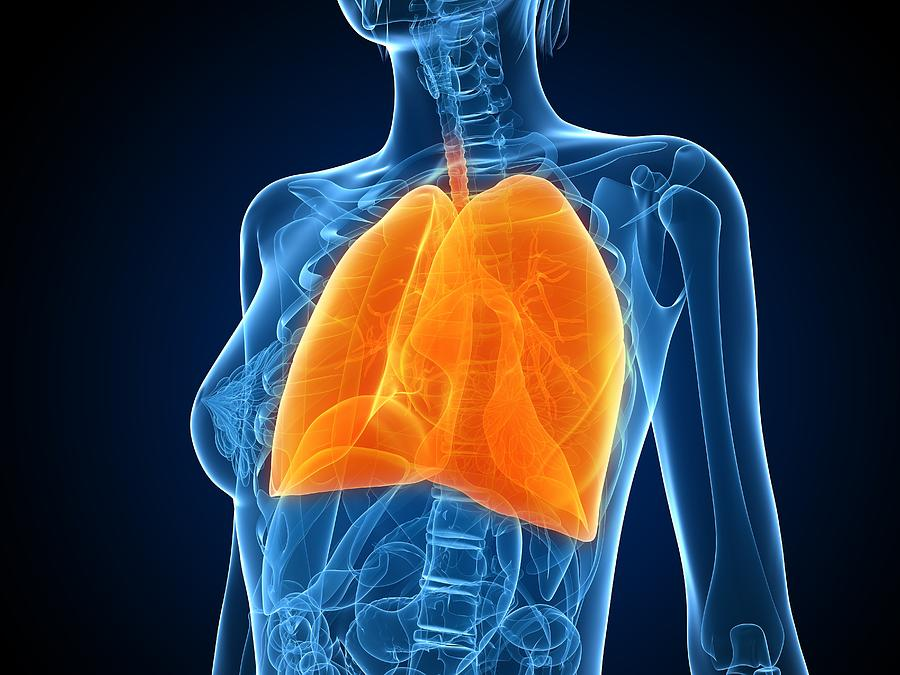 Artwork Photograph - Healthy Lungs, Artwork by Sciepro