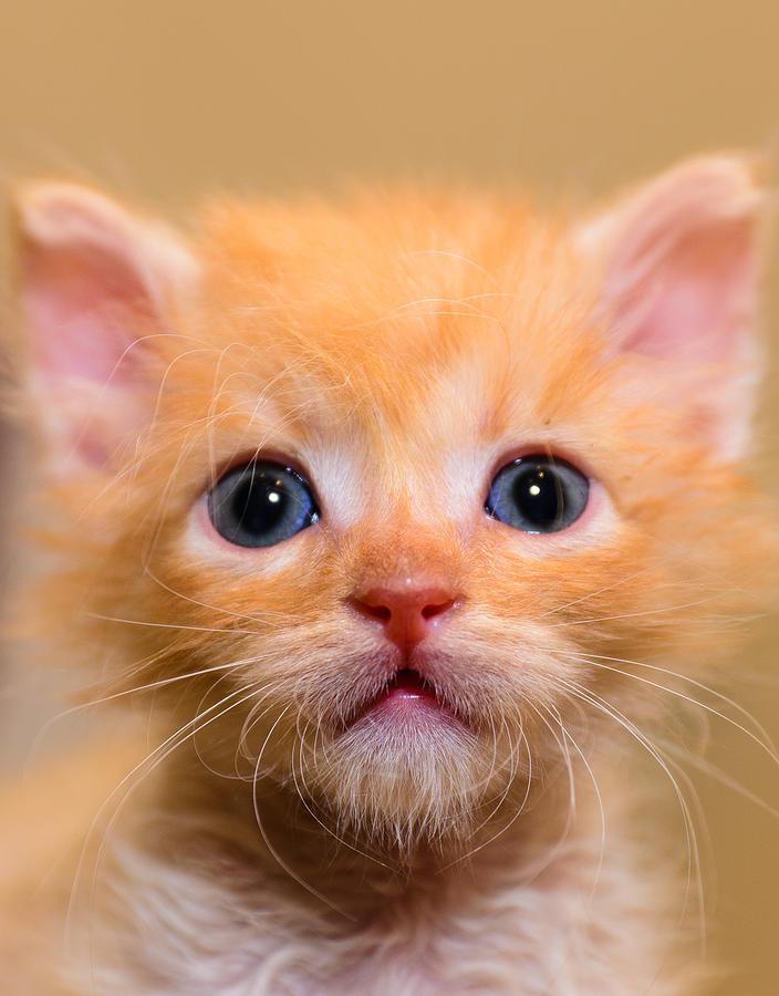 Animal Photograph - Kitty by Michael Goyberg