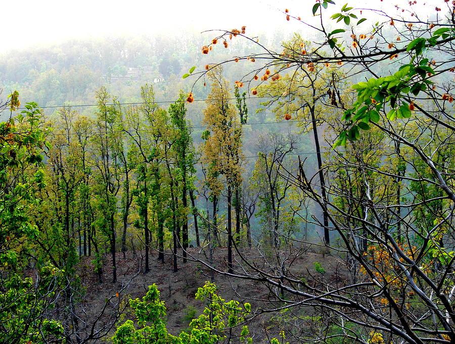 Flowers Photograph - Splendors Of Himalayas by Anand Swaroop Manchiraju