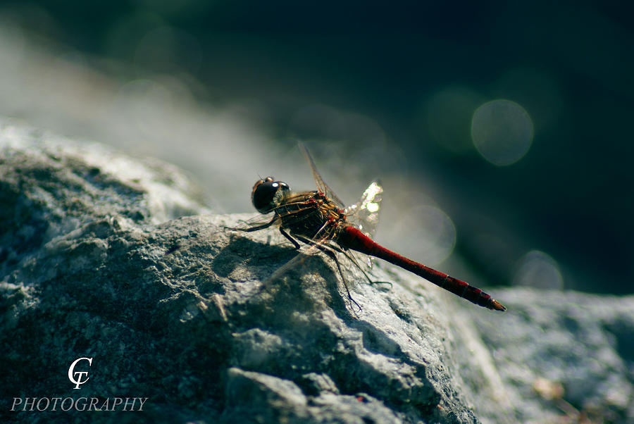Animals Photograph - 77 by Carolina Artemis Tamvaki