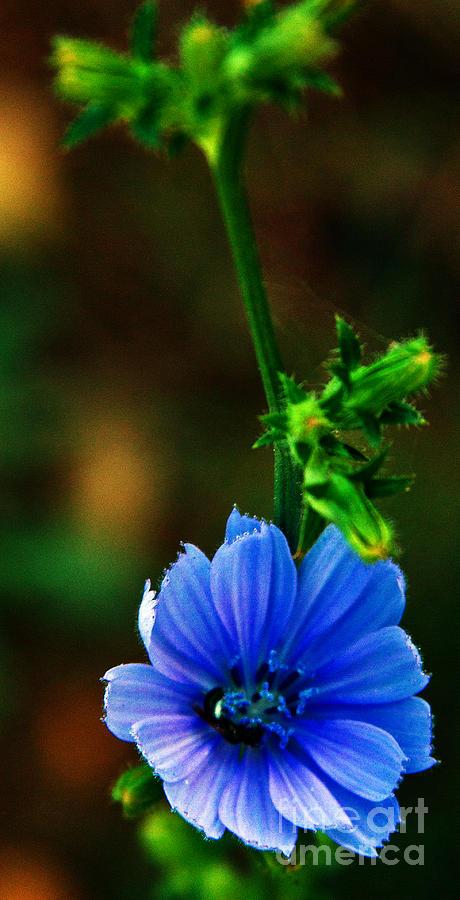 Flower Photograph by Lenroy Johnson