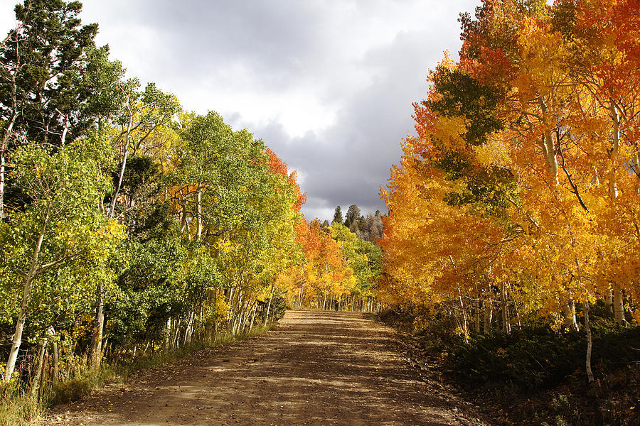 Color Photograph Photograph - Rocky Mountain Fall by Mark Smith