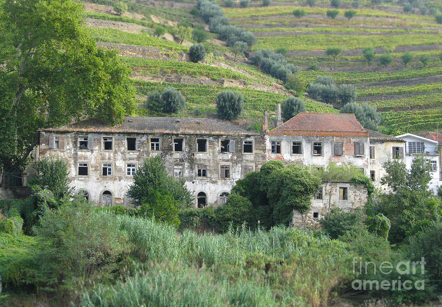 International Photograph - Douro River Valley by Arlene Carmel