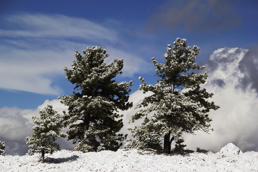 Autumn Photographs Photograph - Rocky Mountain Fall by Mark Smith