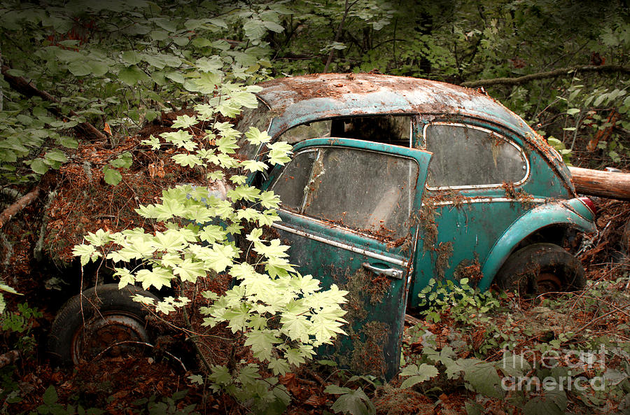 1965 Photograph - A 65 Bug In The Overgrowth by Michael David Sorensen