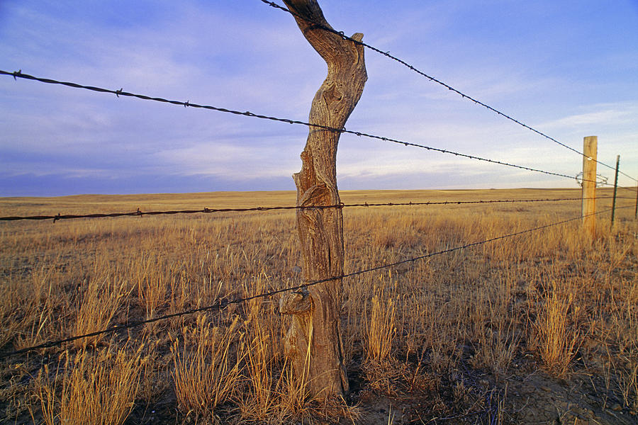 Phillips County Photograph - A Barbed Wire Fence Stretches by Gordon Wiltsie