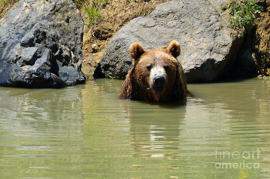 A Bear's Hot Tub Photograph - A Bears Hot Tub by Methune Hively