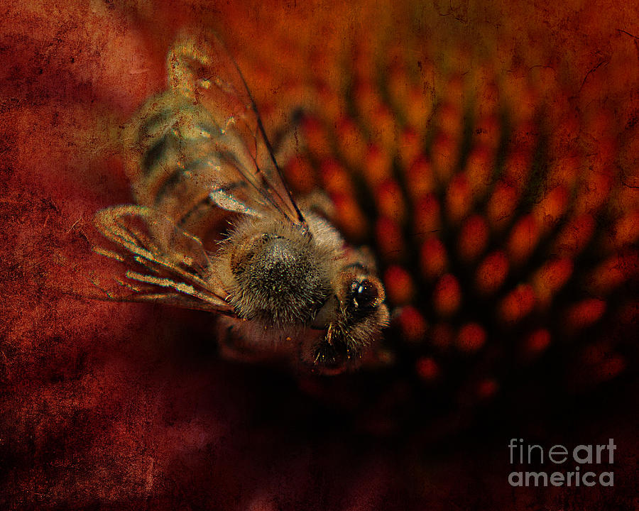 Bee Photograph - a Bee by Billie-Jo Miller