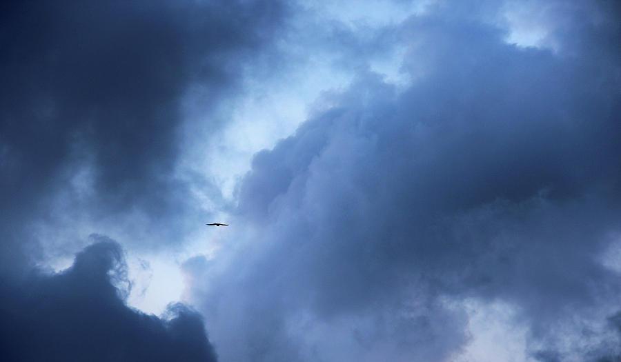 Bird Photograph - A Bird Flying In Cloudy Sky by Gal Ashkenazi