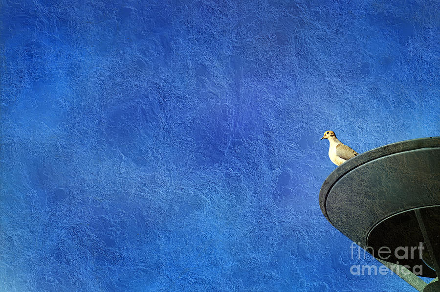 Mourning Dove. Morning Dove Photograph - A Birds Eye View by Andee Design