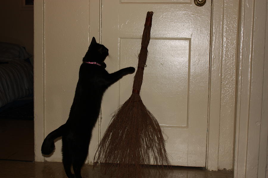 A Black Cat And Her Broom