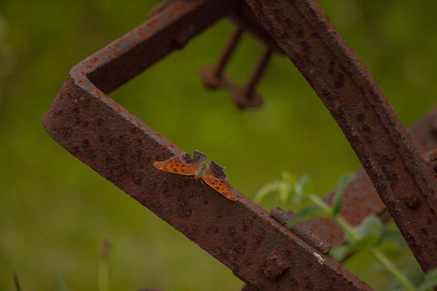 Farm Equipment Photograph - A Butterflys Resting Place by Karol Livote