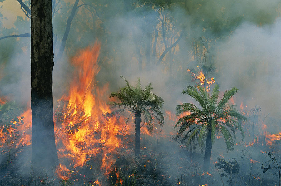 Controlled Fires Photograph - A Controlled Fire Helps Prevent by Randy Olson