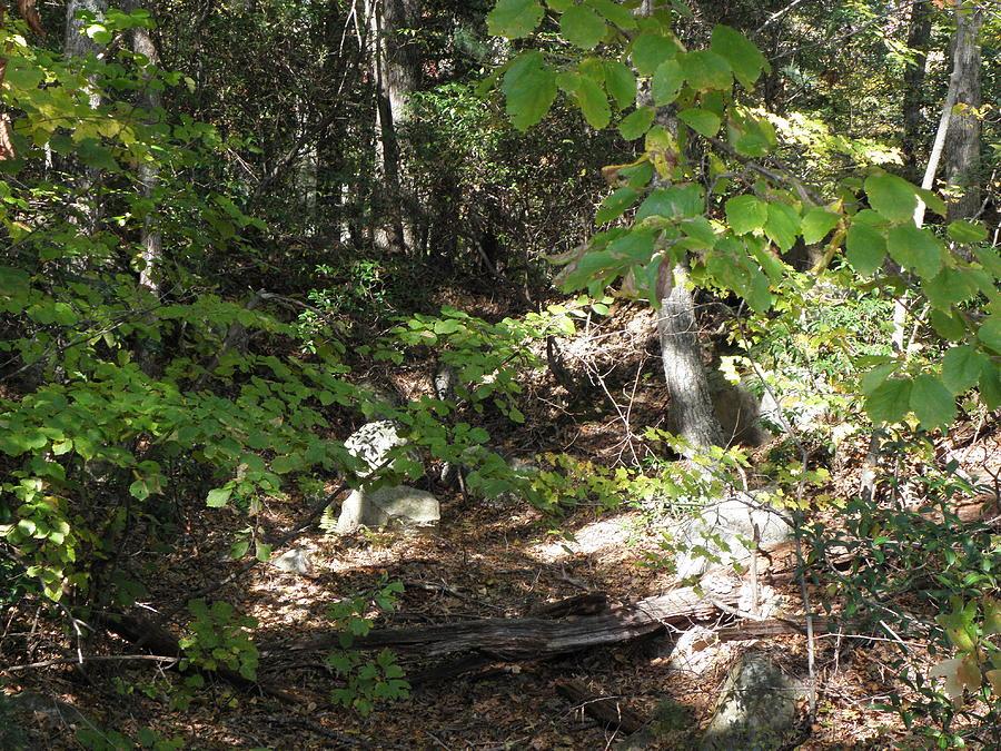 Woods Photograph - A Country Path by Kim Galluzzo Wozniak