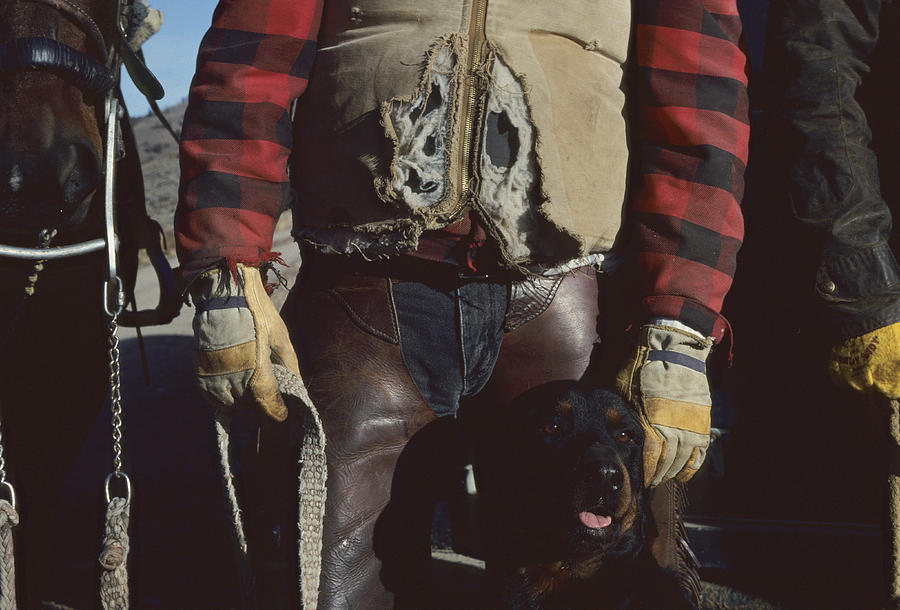 Animals Photograph - A Cowboy, Wearing A Ripped Jacket by Joel Sartore