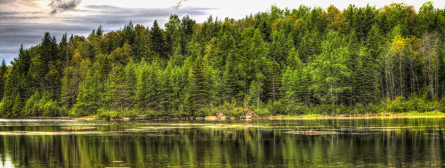 Forest Photograph - A Day In The Forest Of Maine by Gary Smith