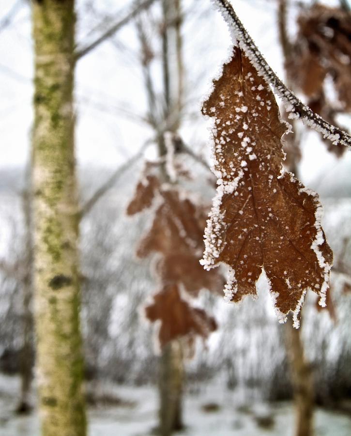 Winter Photograph - A Definite Chill by Odd Jeppesen