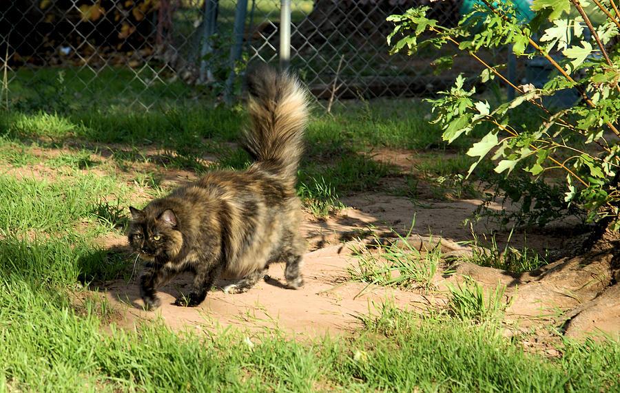 Calico Cat Photos Photograph - A Different Calico Cat by Cheryl Poland