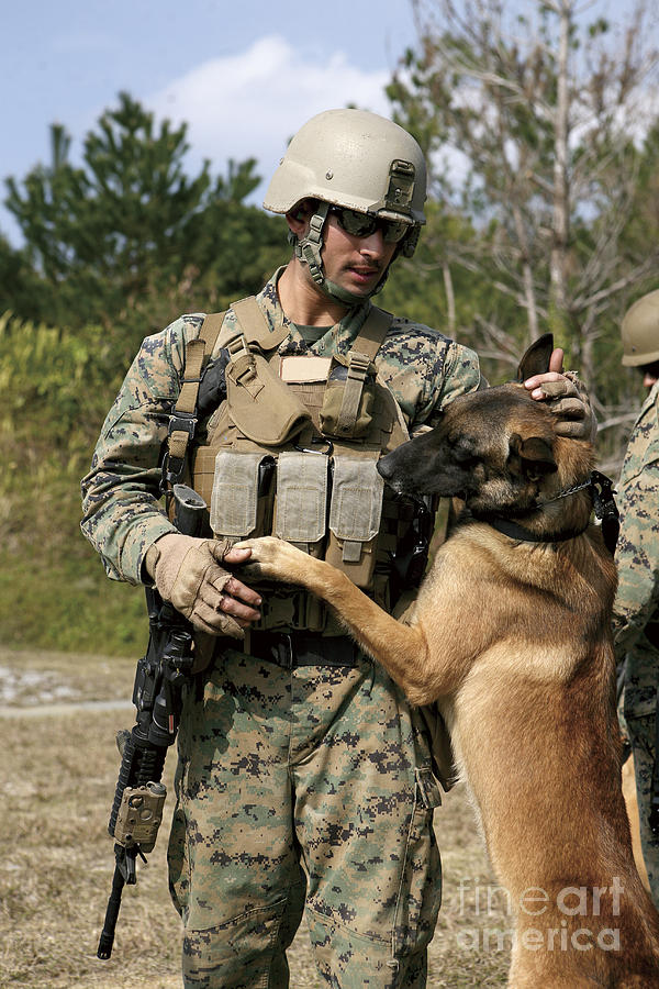 Friendship Photograph - A Dog Handler Gives Positive by Stocktrek Images