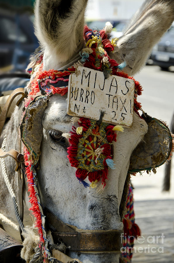 Donkey Photograph - A Donkey Taxi In A Village Of Spain by Perry Van Munster
