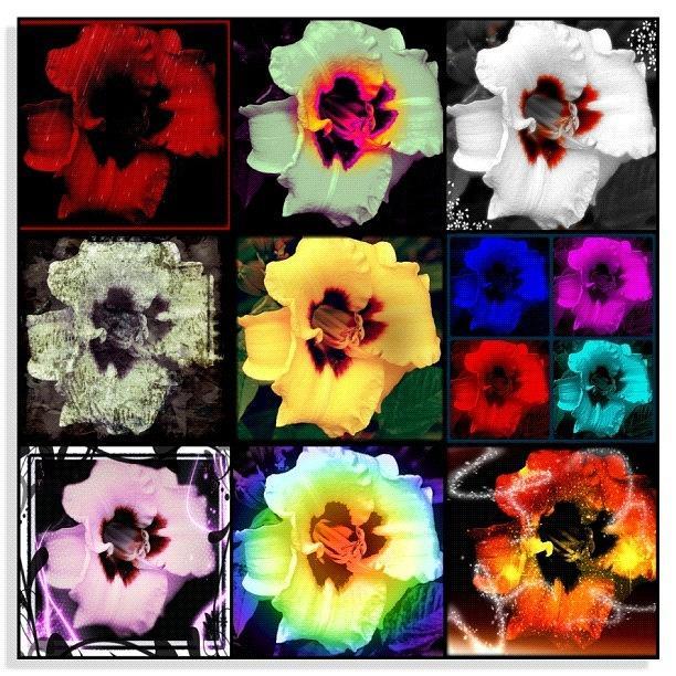 Nature Photograph - A Dozen Blooms by Mari Posa