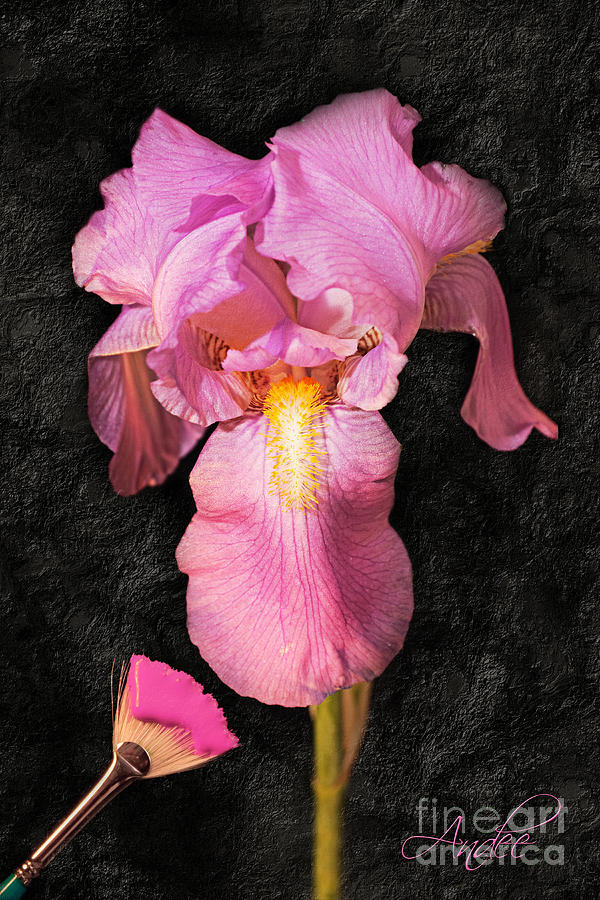 Iris Photograph - A Flora Is Natures Painting by Andee Design