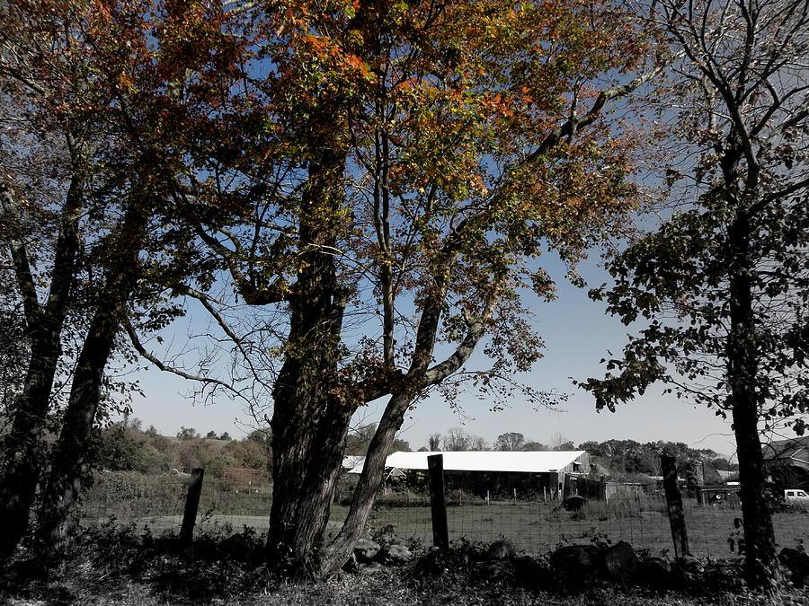 Farm Photograph - A Focal Setting  by Kim Galluzzo Wozniak