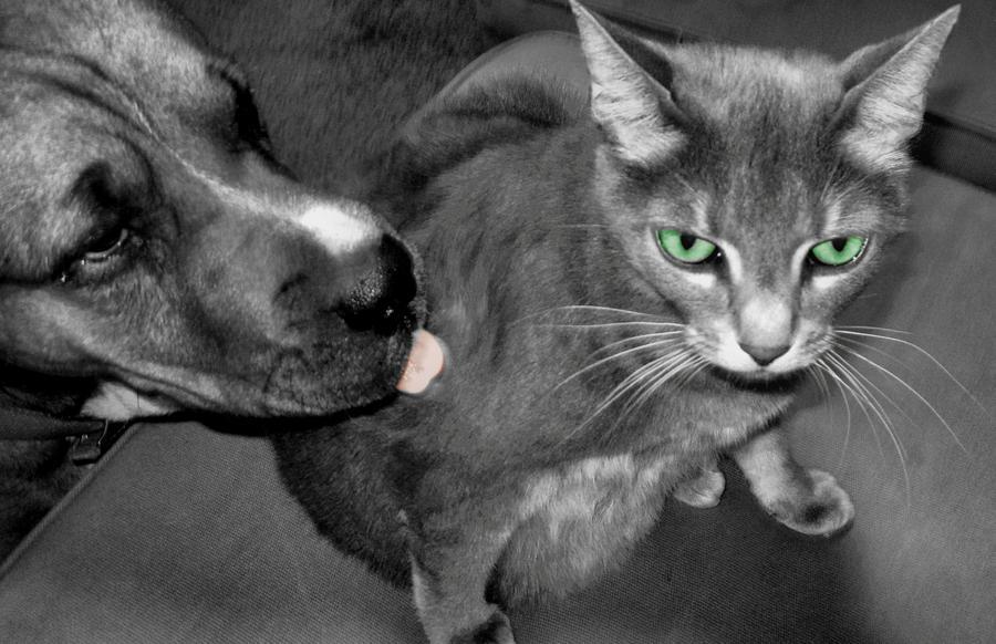 Cat Photograph - A Forbidden Love  by Juliana  Blessington